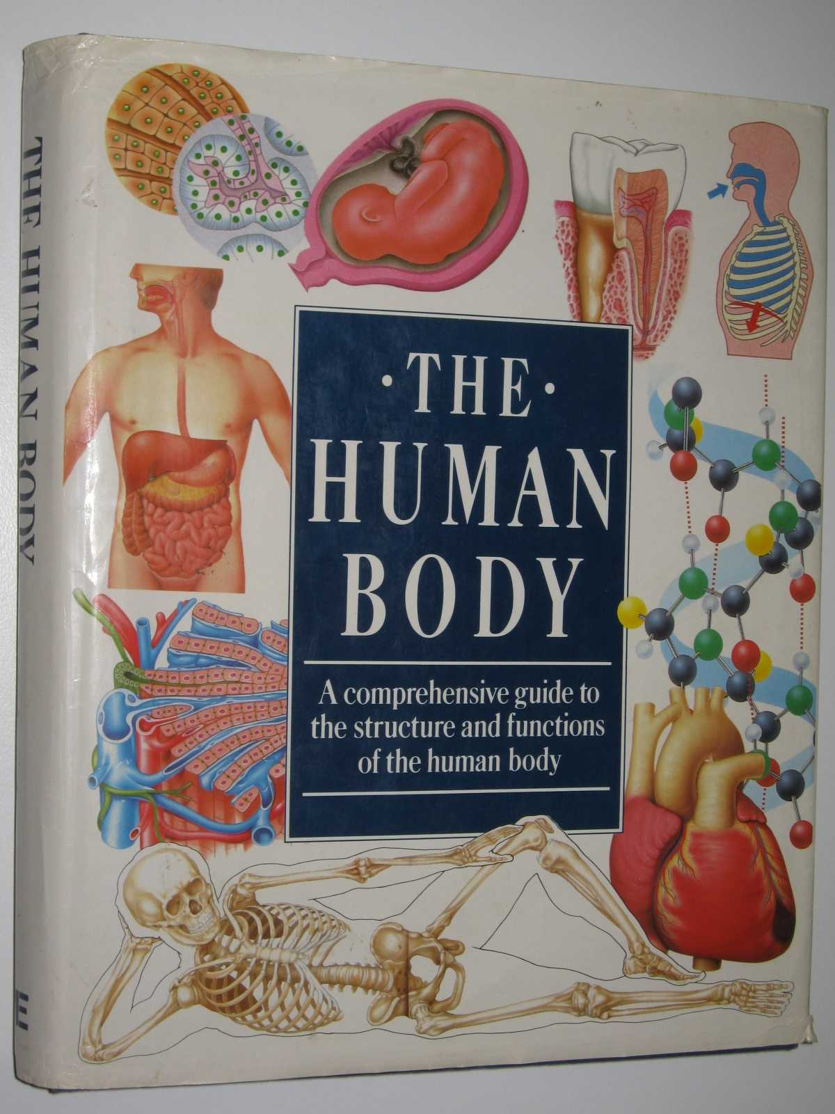 The Human Body : A Comprehensive Guide to the Structure and Functions of the Human Body, Clark, John E. (edited)