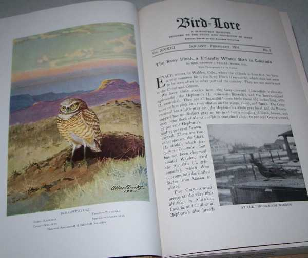 Bird-Lore: An Illustrated Bi-Monthly Magazine Devoted to the Study and Protection of Birds Volume XXXIII, 1931, Bound in One Volume, Chapman, Frank M. (ed.)