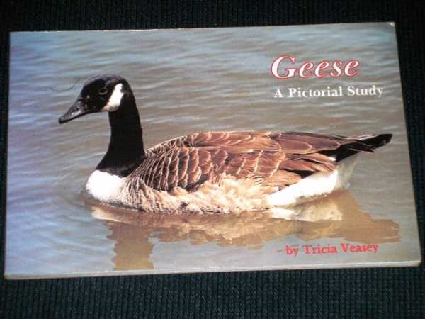Geese a Pictorial Study, Veasey, Tricia