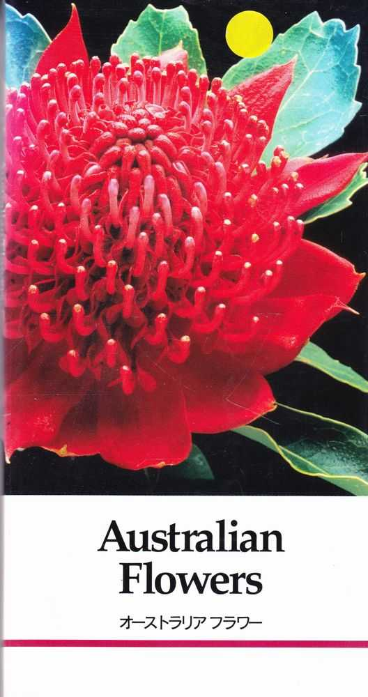 Australian Flowers Catalogue for Japanese Importers, Flower Export Council of Australia / Susumu Sugiyama