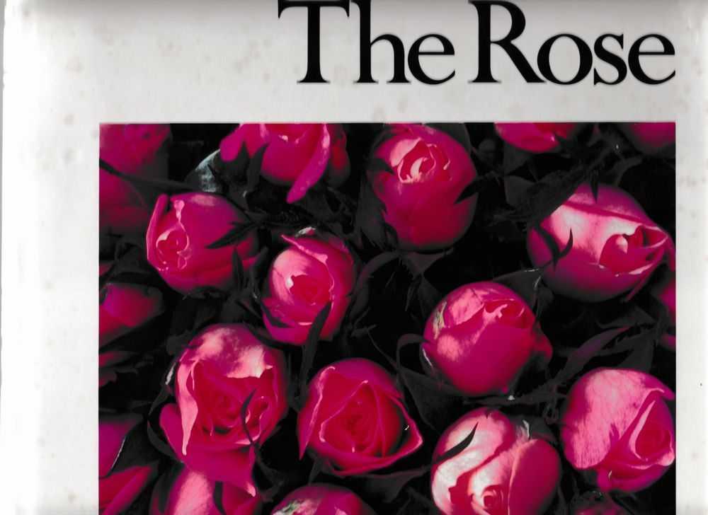 The Rose, Ann Reilly