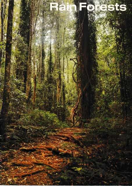 Rain Forests, Wendy Goldstein [Editor]