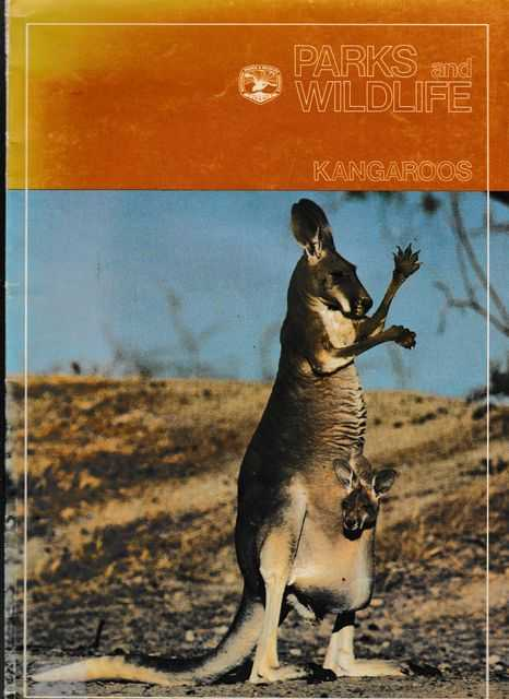 Kangaroos, NSW National Parks and Wildlife Service