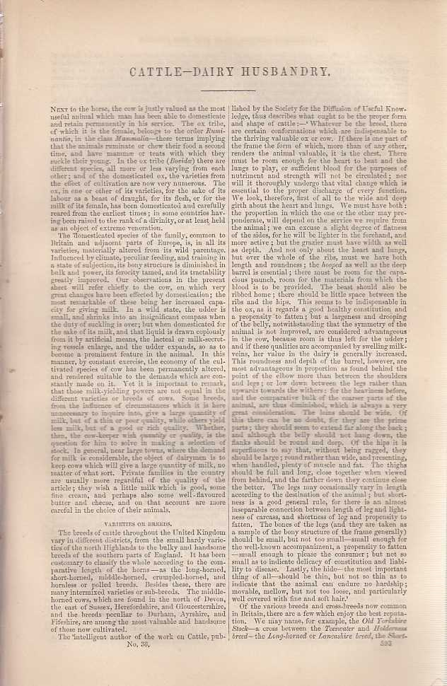 Cattle, Dairy and Animal Husbandry. An article from Chambers's Information for the People., Chambers, William and Robert.