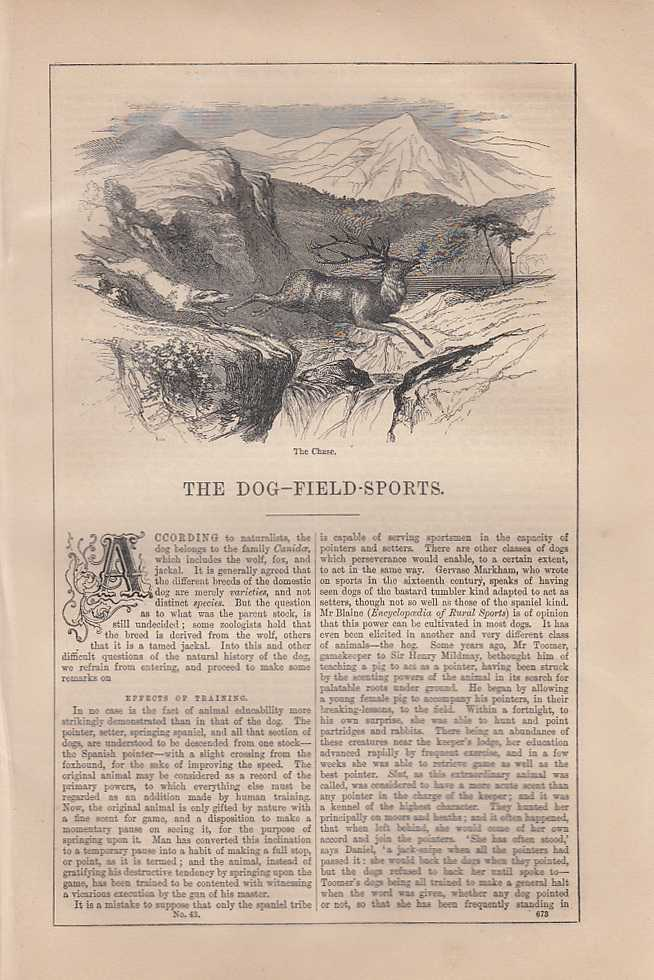 Dog and Field Sports. An article from Chambers's Information for the People., Chambers, William and Robert.