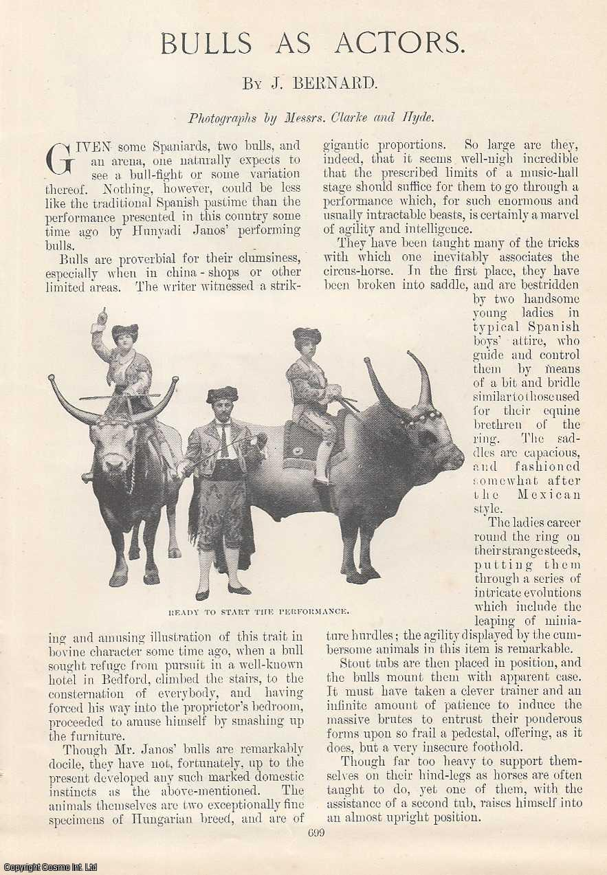 Bulls as Actors. Photographs by Messrs Clarke & Hyde., Bernard, J.