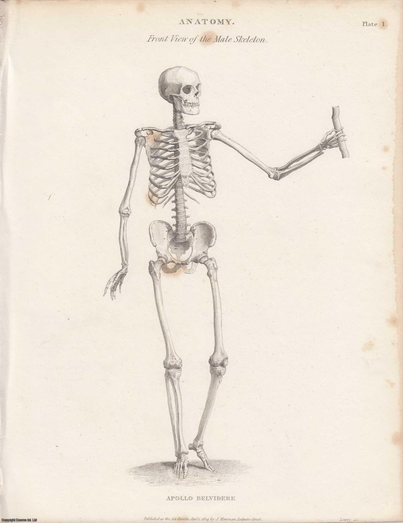 J . F. SOUTH, AND F. LE GROS CLARK. - Anatomy.  An Article From the Encyclopaedia Metropolitana.