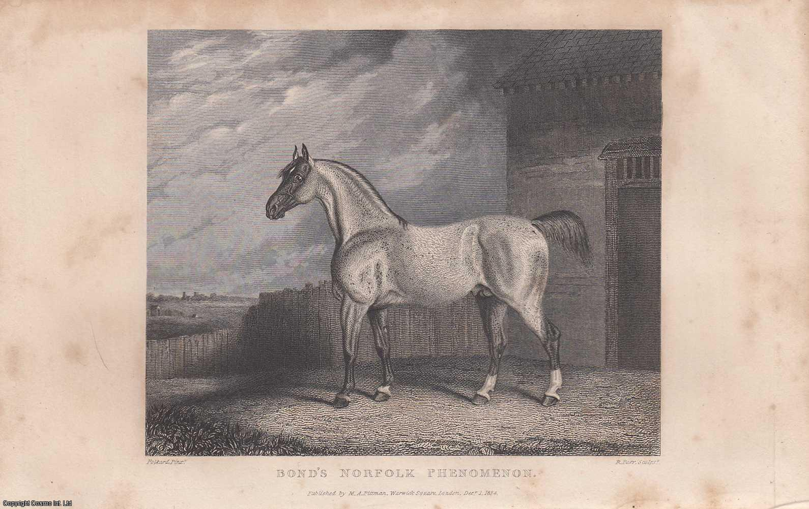 Bond's Norfolk Phenomenon. Engraved by Parr, from a painting by Folkard, of Beccles., ---.