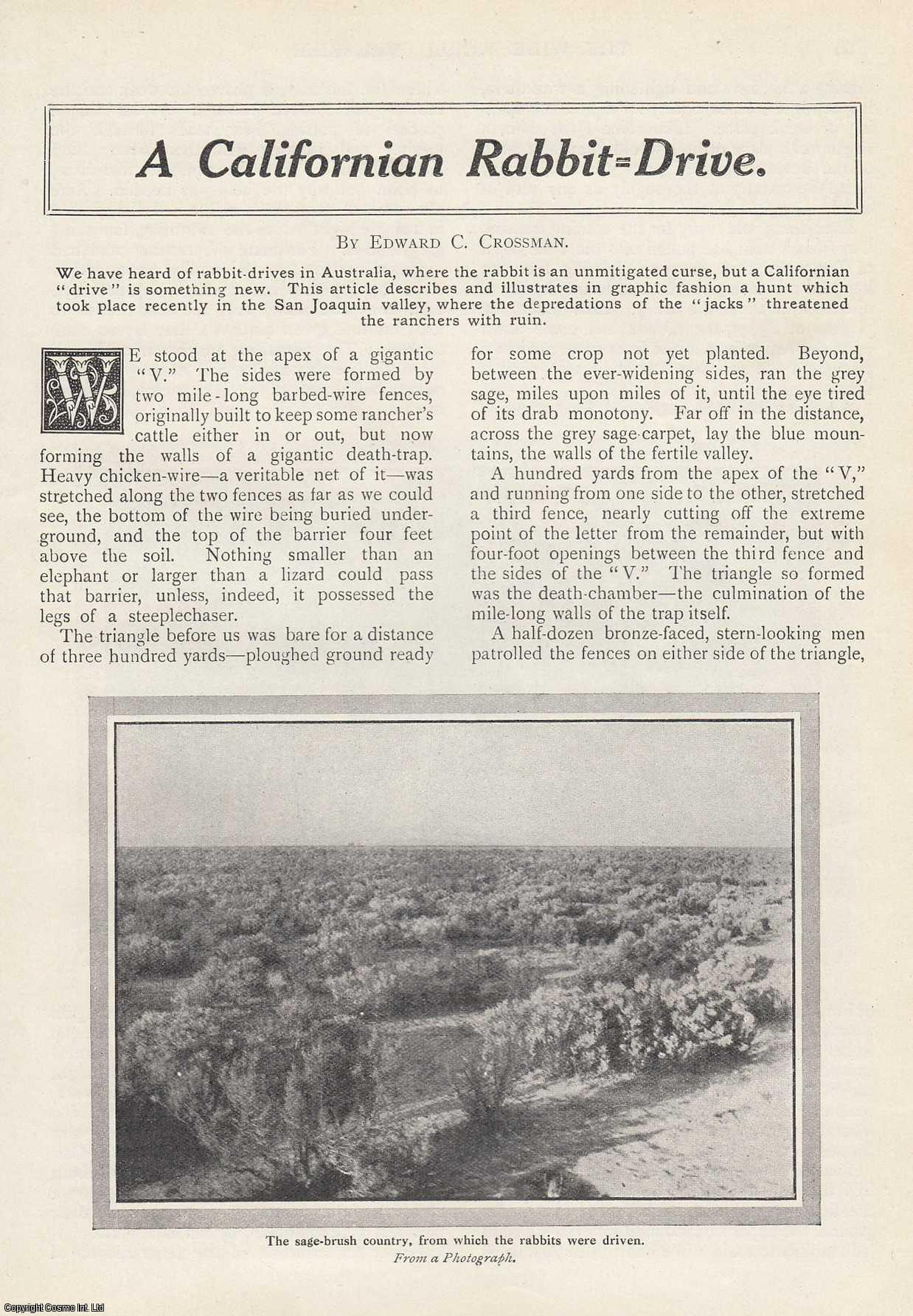 A Californian Rabbit Drive. A hunt which took place in the San Joaquin valley., Crossman, Edward C.