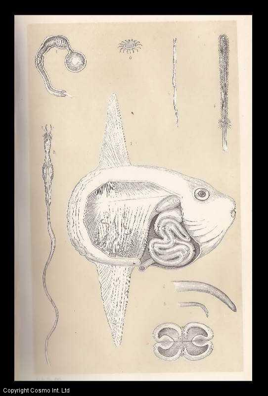 COBBOLD, T. SPENCER - The Sunfish as a Host. An original article from the Intellectual Observer 1863.