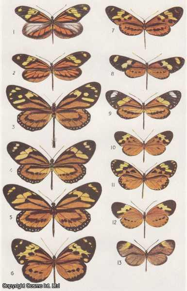 Observations on The Bionomics of The Lepidoptera of Matto Grosso, Brazil., Collenette & G. Talbot, C.L.