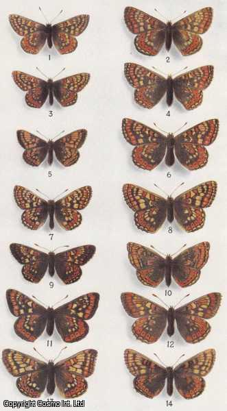 Fluctuation in Numbers, and its Influence on Variation, in Melitaea Aurinia, Rott (Lepidoptera)., Ford & E.B. Ford, H.D.