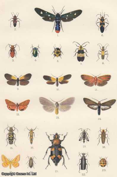 Insect Coloration and The Relative Acceptability of Insects to Birds., Jones, Frank Morton