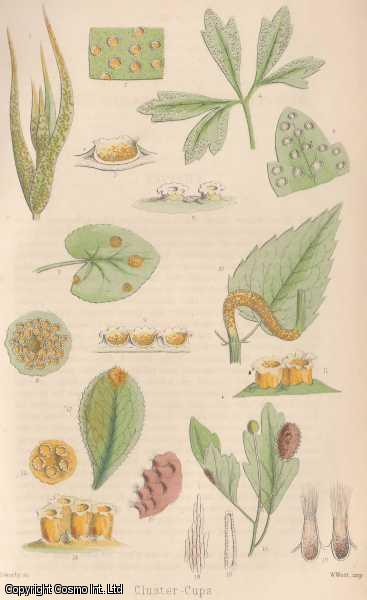 Microscopic Fungi - Parasitic on Living Plants: Cluster-Cups., Cooke, M.C.