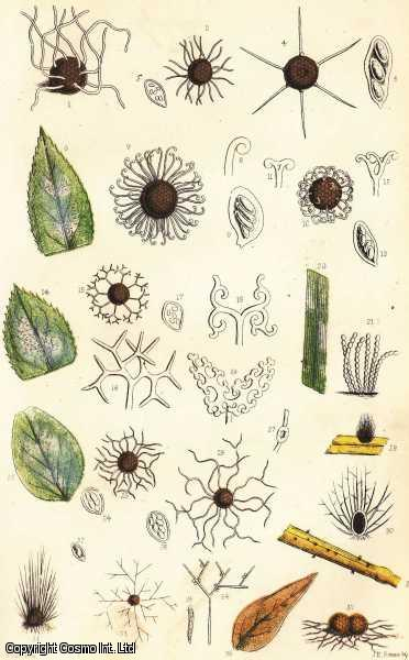 The White Rust and Other Microscopic Fungi., Cooke, M.C.
