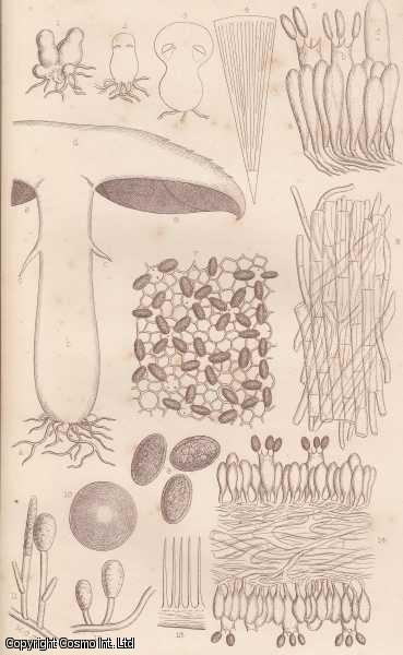 The Anatomy of a Mushroom., Cooke, M.C.