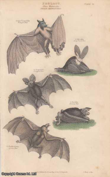 [HAND COLOURED PRINT].  Zoology. Class Mammalia.  Order Cheiroptera. Featuring 5 variety of Bats., ---