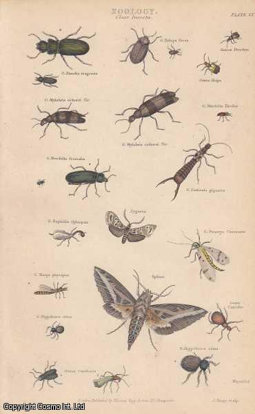 [HAND COLOURED PRINT].  Zoology. Class Insecta. Featuring 22 insects., ---