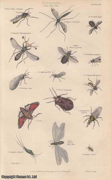 [HAND COLOURED PRINT].  Zoology. Class Insecta. Featuring 15 insects., ---