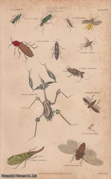 [HAND COLOURED PRINT].  Zoology. Class Insecta. Featuring 13 insects, including a Mantis., ---