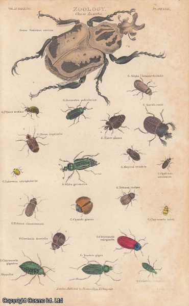 [HAND COLOURED PRINT].  Zoology. Class Insecta. Featuring 20 insects, including a Goliathus cacicus., ---