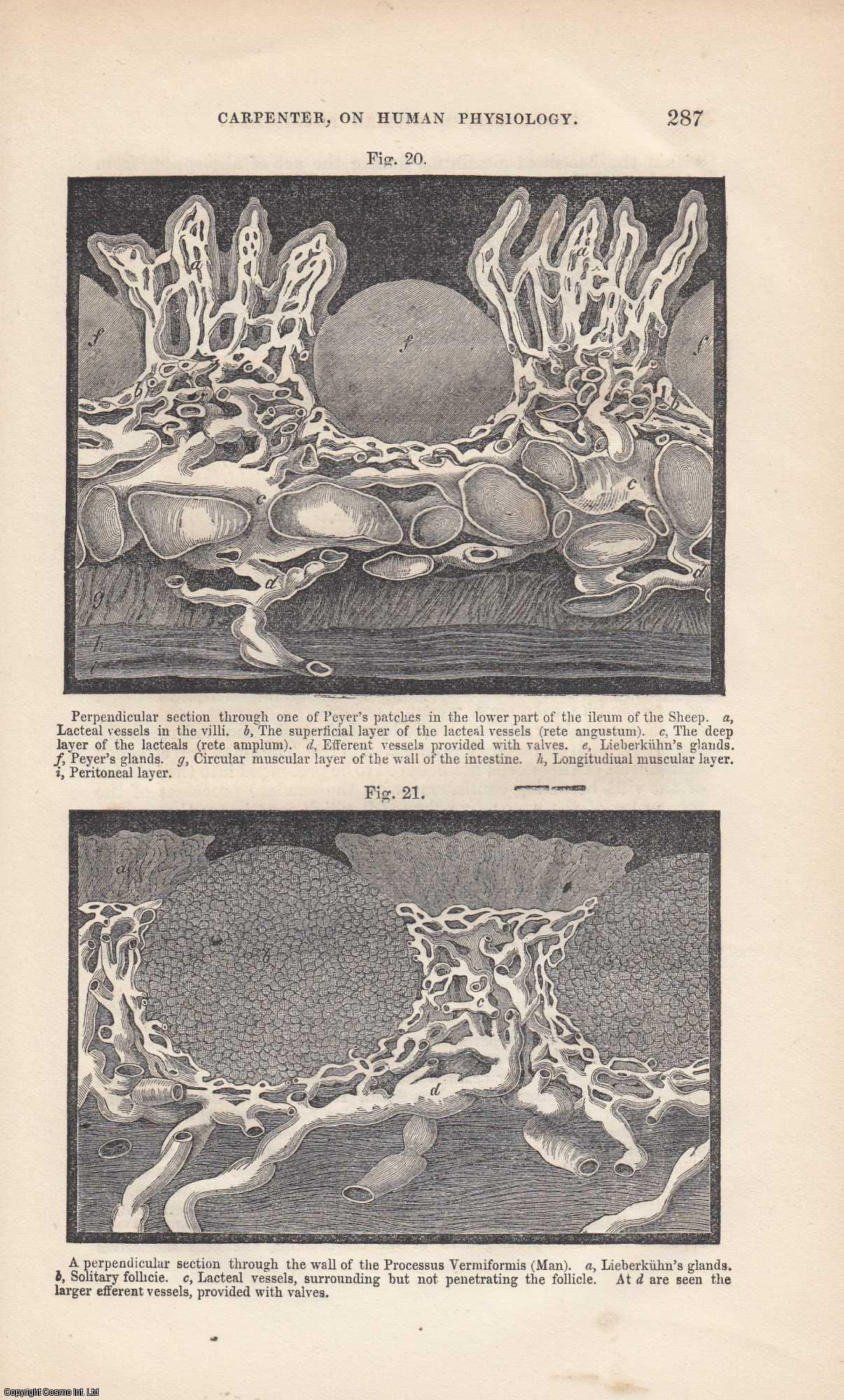 --- - Principles of Human Physiology, by William B. Carpenter. A Review. An original article from the Quarterly Journal of Microscopical Science 1864.